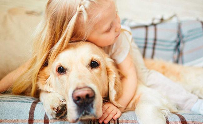 Tem filho pequeno ou animal de estimação? Cuidado com os móveis!
