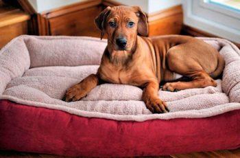 jb-dublagem-tecidos-para-pets-quais-tecidos-usar